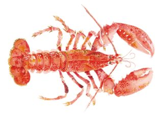 Lobster II - Signed Limited Edition Print By Angie horder