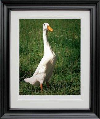 Dottie Signed Limited edition print by Paul James Framed in the artists recommended frame