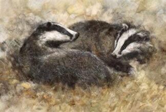 Badgers at Play