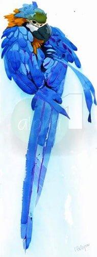 bluegoldmacaw.jpg