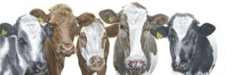 The Boys By Gina Hawkshaw Signed Limited Edition Giclee On Paper Mounted