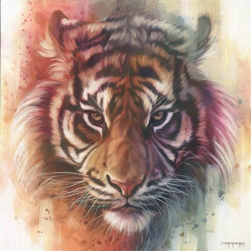 Eye Of The Tiger Pics eye of the tiger (canvas)ben jeffery, limited edition mounted