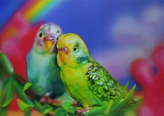 Budgie Love - Signed Limited Edition From Sarah Graham