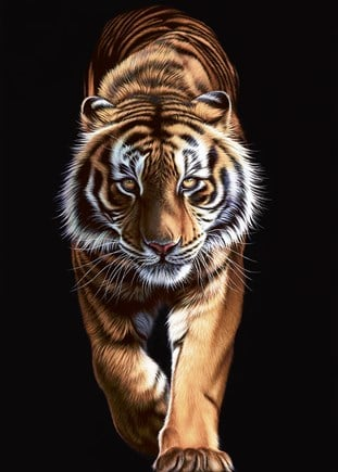 On The Prowl- Hand Finished Signed Limited Edition by Darryn Eggleton - Unframed