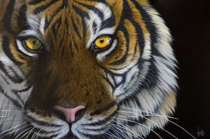 Tiger Eyes - Signed Limited Edition by Jonathan Truss - Unframed