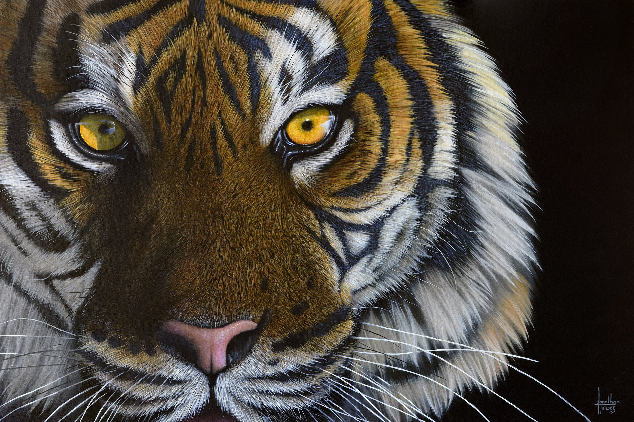 Tiger Eyes Paper By Jonathan Truss Limited Edition