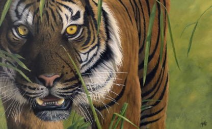 Tiger Tiger - Signed Limited Edition by Jonathan Truss - Unframed