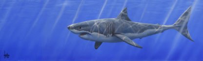 Great White Shark - Signed Limited edition paper print from animal artist Jonathan Truss - Mounted Unframed