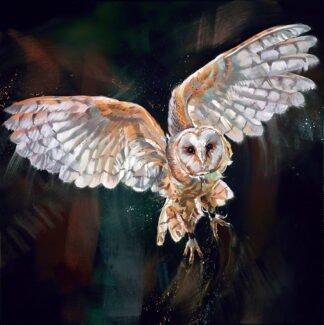 Night Flight by Debbie Boon
