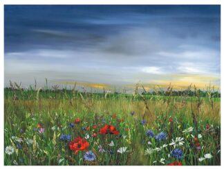 Poppy Dawn by Kimberley Harris