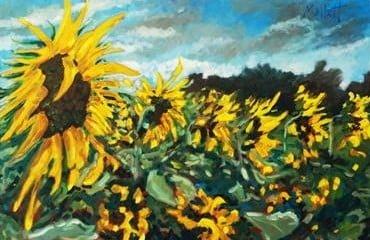 Sunflower Season by Timmy Mallett