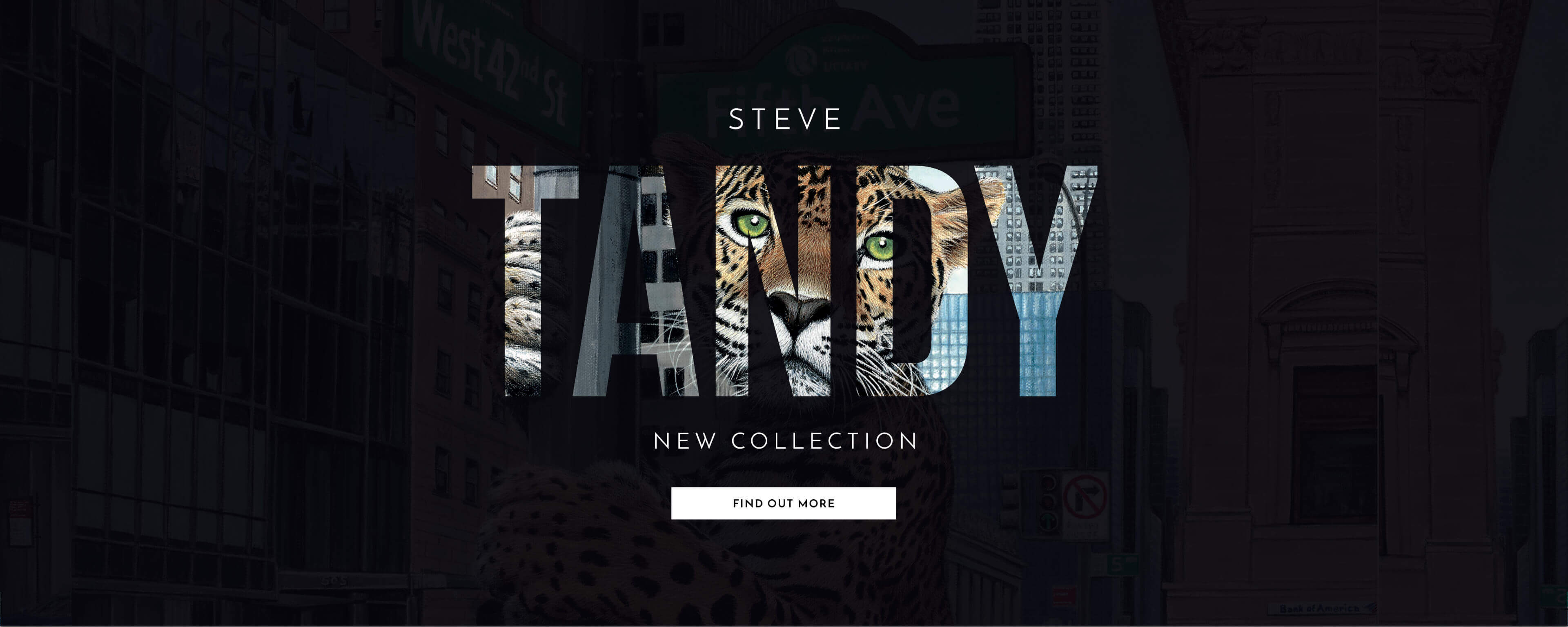 Steve Tandy | New Releases